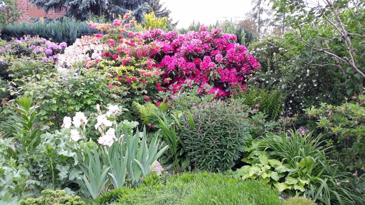 Garten26 (1)