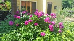 Garten 22 (14)