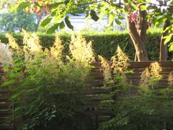 Garten 27 (13)