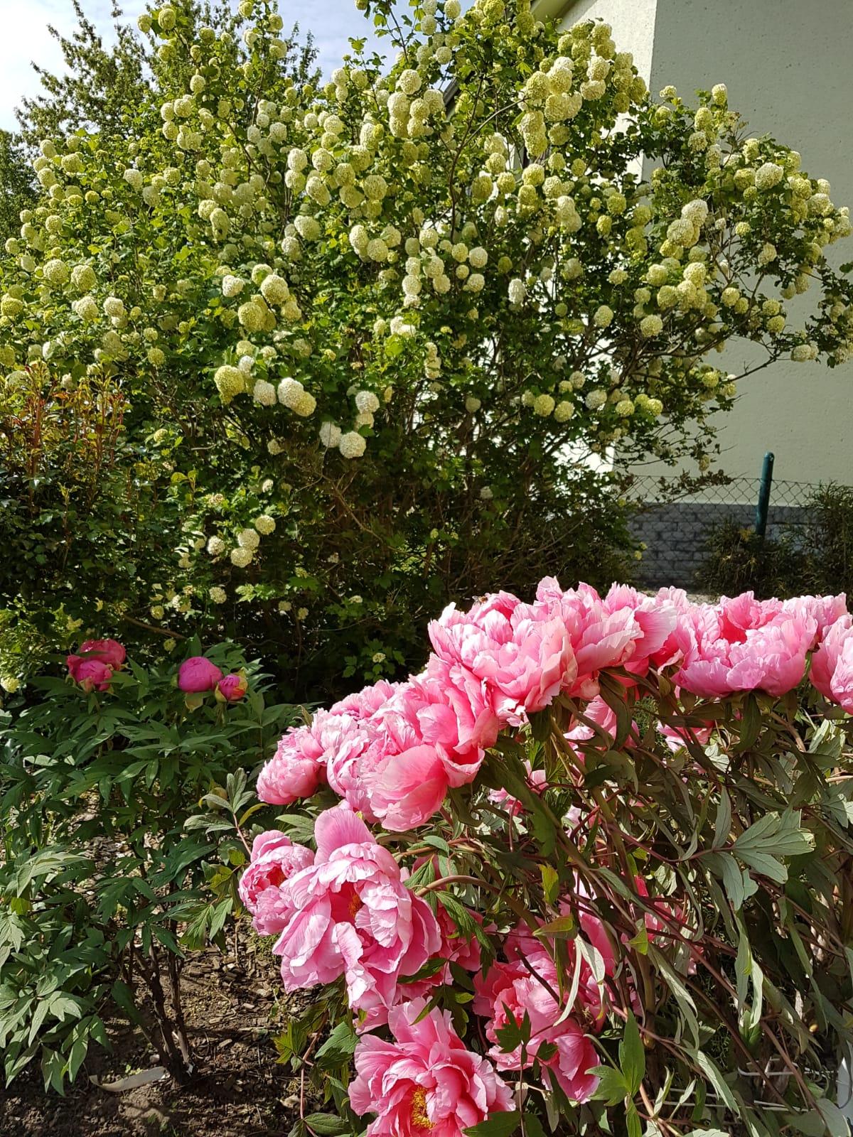 Garten 25 (6)