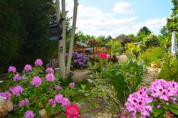 Rhododendronweg