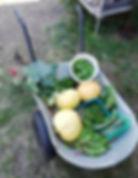 Garten 20 (1).jpg