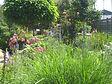 Garten 27 (4).JPG