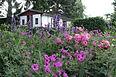 Garten 23 (5).jpg