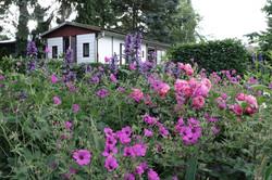 Garten 23 (5)