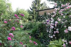 Garten 23 (7)