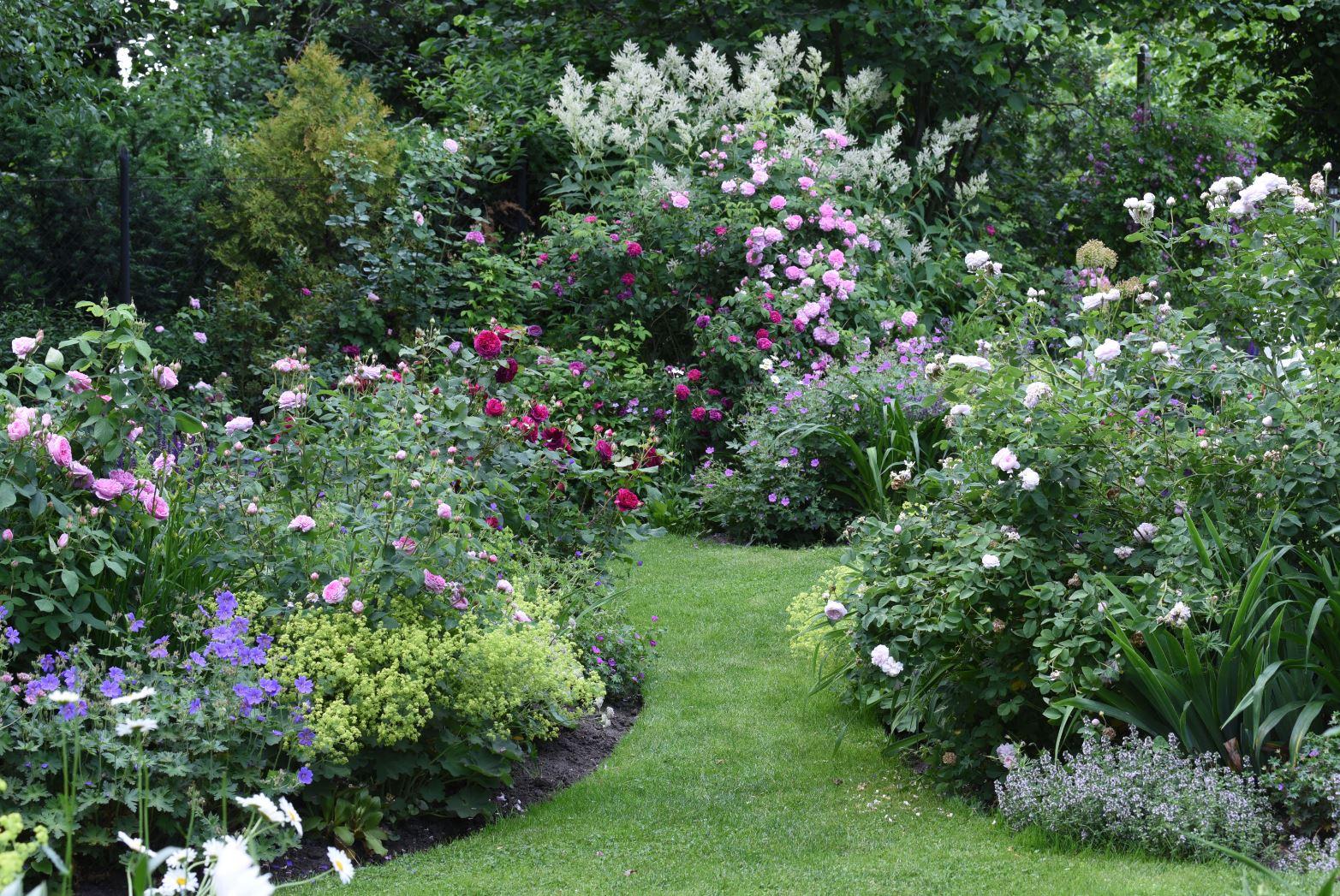 Garten 23 (3)