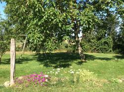 Gacous in Bloom