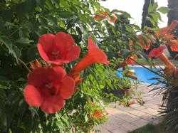 Gascous in Bloom