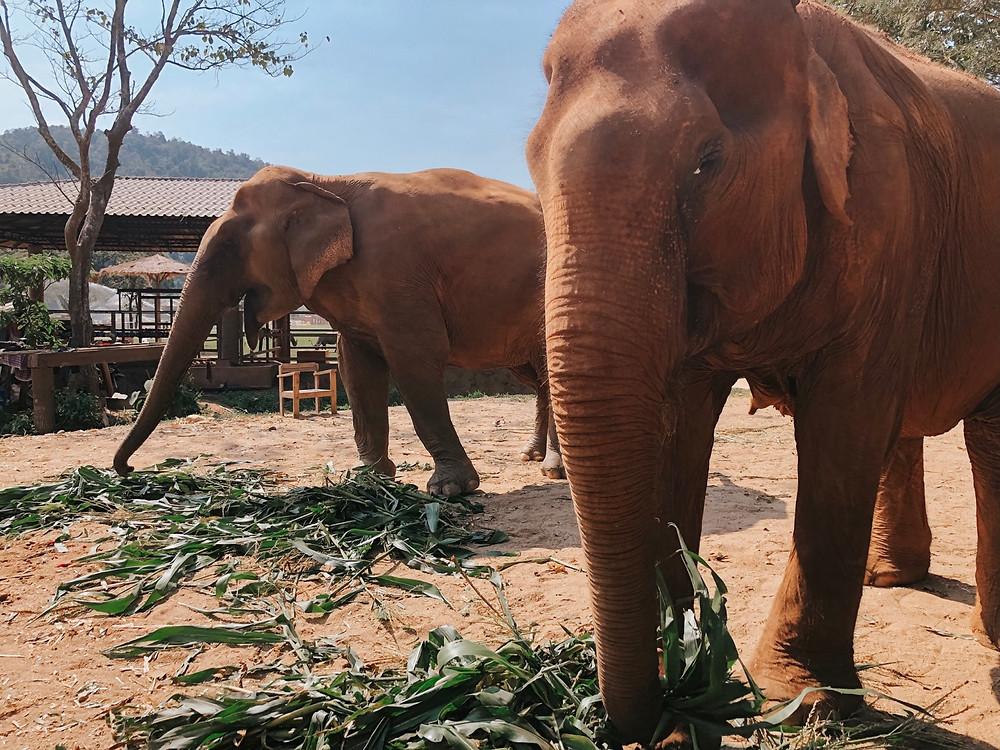 Elephant Nature Park Chiang Mai, Thailand