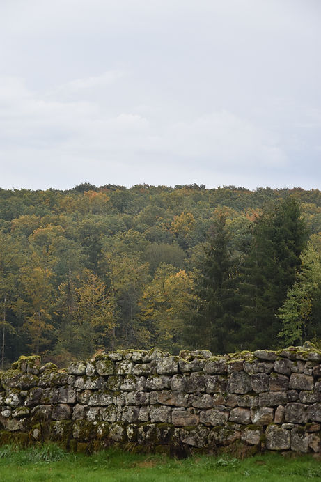 Muret de pierres près du Prieuré de Grobois - vue sur la forêt