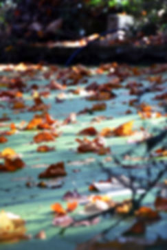 mare, feuilles mortes, vert, orange, blog, arboretum