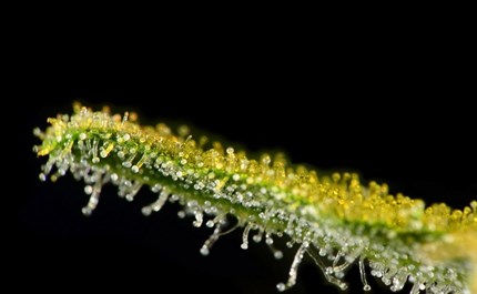 fern-flora-plant-droplet-water-blossom-f