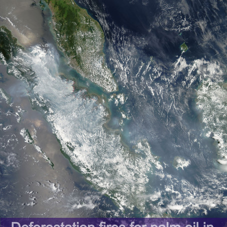 NASA captures space views of palm oil deforestation