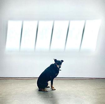 Quip gallery dog.JPG