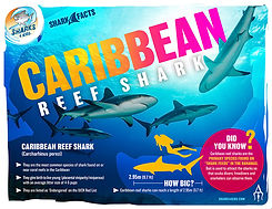 S4K_FactSheet_CaribbeanReef_V1 low.jpg
