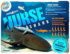 nurse shark facts low.jpg