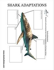 shark adaptations low.jpg