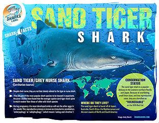 Sand tiger fact low.jpg