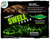 S4K_FactSheet_Swell shark low.jpg