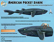 pocketshark low.jpg