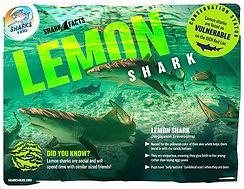 lemon shark low.jpg