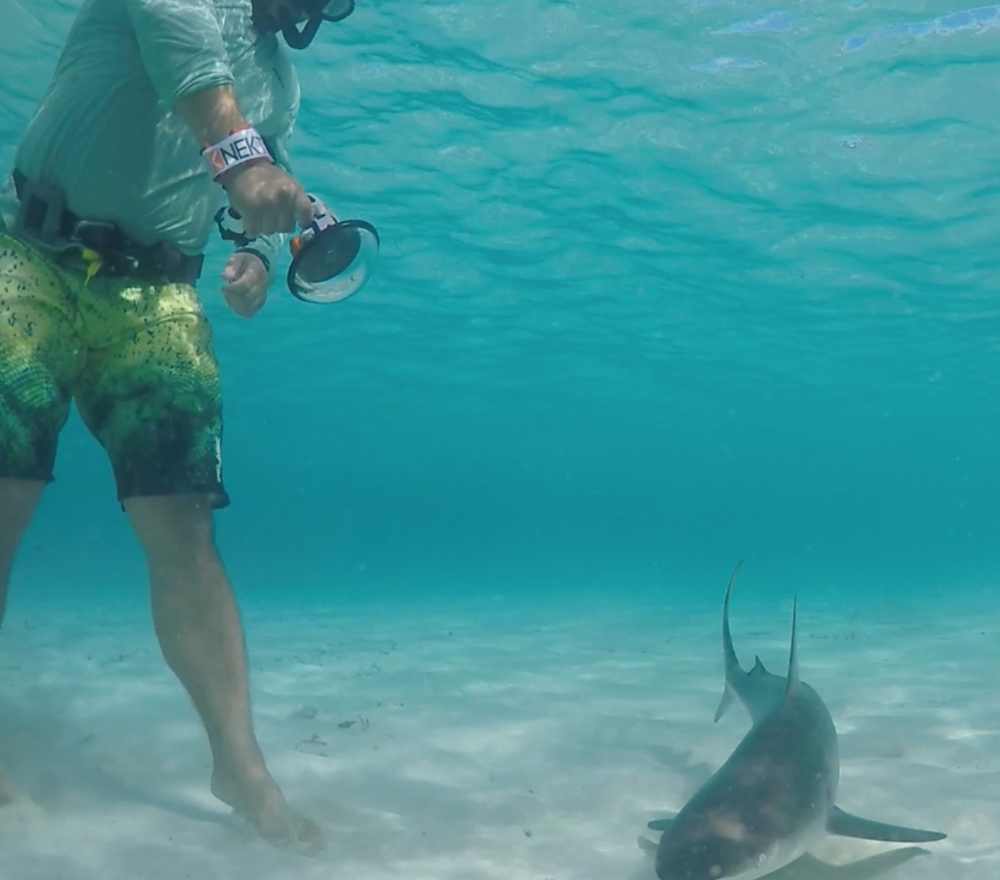 Gabe taking video of a blacktop shark in The Bahamas
