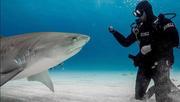 Shark Bite Suvivor & Advocate Paul de Gelder Sharks.jpg