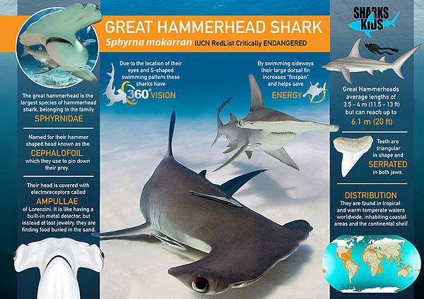 Great Hammerhead Super powers Poster low