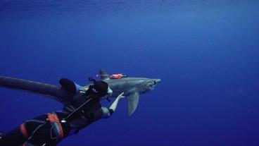 Sharks of the Deep Sea with Paul Clerkin