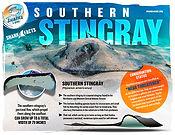 Southern stingray low.jpg