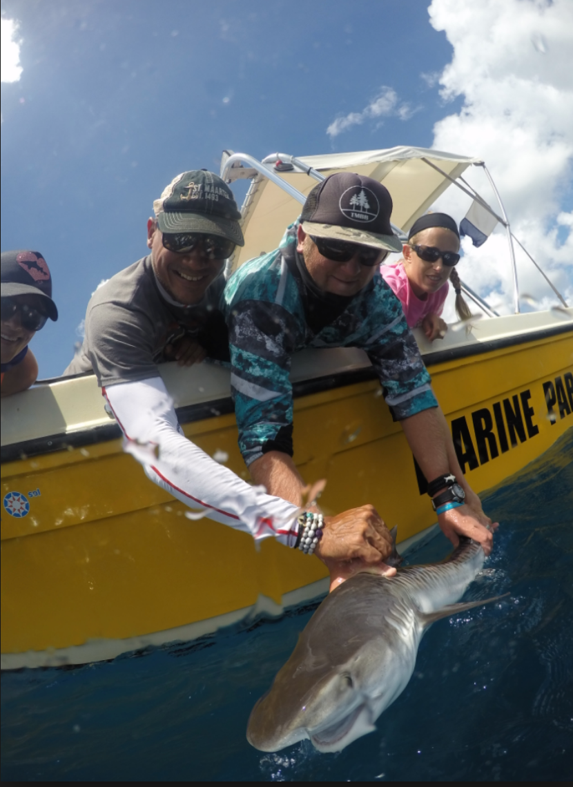 The team ready to release a tagged tiger shark