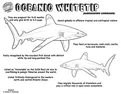 Oceanic Whitetip coloring facts low.jpg
