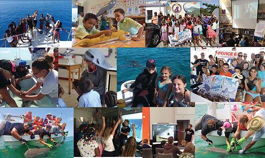 Shark Education and Outreach