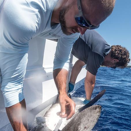 Meet Marine Biologist Ryan Knotek