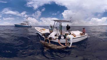 Impacts of Shark Fishing with Ryan Knotek