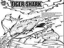 tiger shark coloring page.jpg
