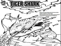 tiger shark coloring page.jpg