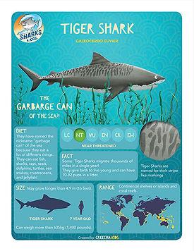 tiger shark infographic.jpg