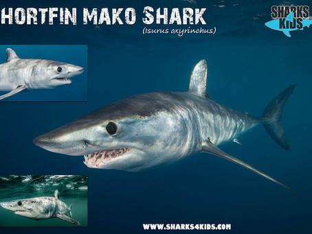 May Elasmobranch of the Month: Shortfin Mako