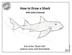 how to draw a shark.jpg