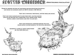 Ornate Wobbegong shark colorng sheet