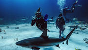 Intro to Sharks with Jenny Bortoluzzi