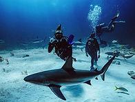 Jenny shark