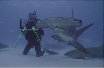 sharks and lasers .jpg