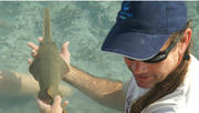 Sawfish Science with Dr. Dean Grubbs