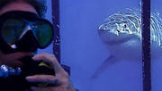 Look into the Eyes of a Shark with Megan Cahill Burt