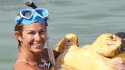 Studying Sea Turtles Annabelle Brooks