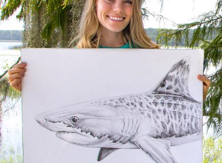 Shark Week: Meet Marine Artist Kelly Quinn
