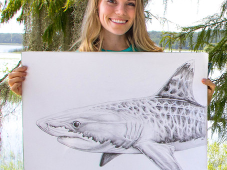 Shark Week: Meet Marine Artist Kelly Quinn
